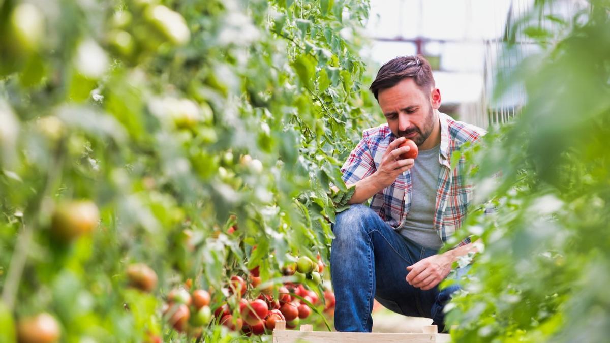 Sipcam o cómo conseguir unos tomates y hortícolas de éxito