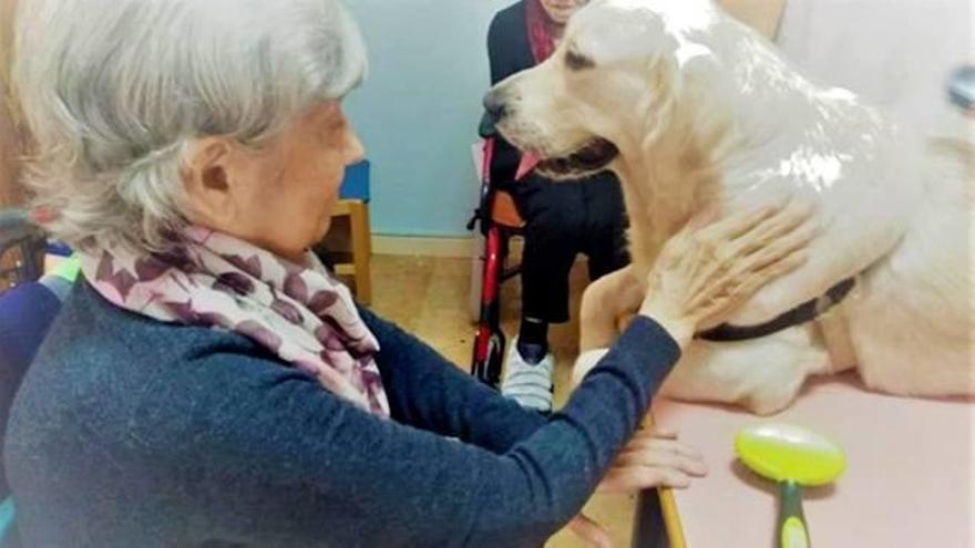 Terapia con perros para los mayores