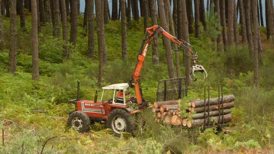 La Xunta bajará impuestos y dará más ayudas a los propietarios de montes que se asocien