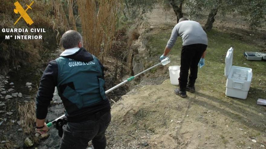 La Guardia Civil imputa a tres responsables de Oleícola el Tejar por el vertido al Guadalquivir