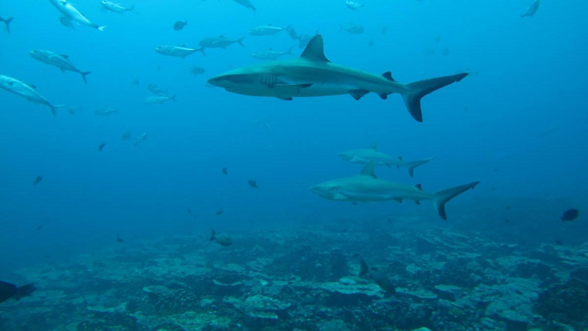 Vista del fondo de un océano