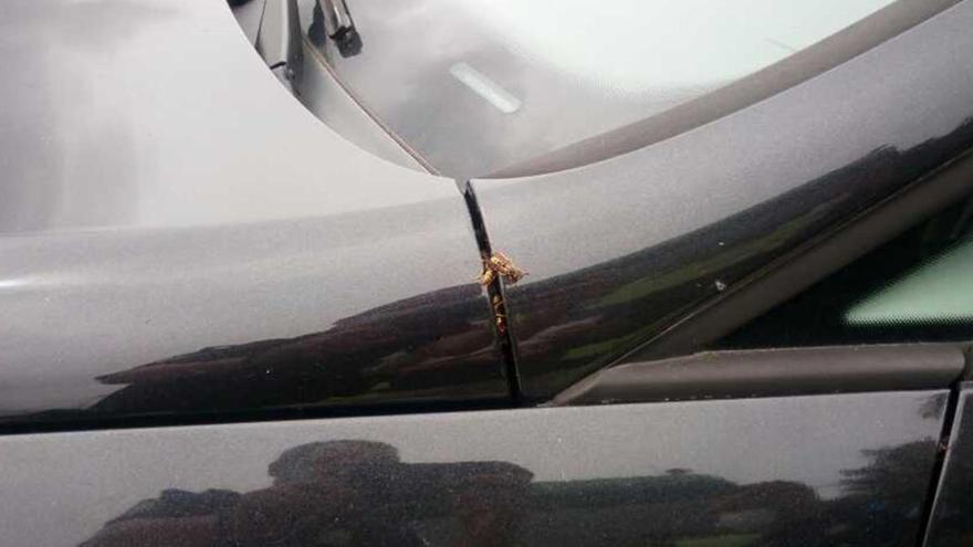 Una colmena en el motor de mi coche
