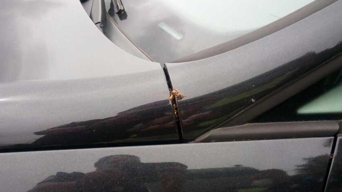 Las abejas saliendo de su nuevo hogar en Vigo, un coche