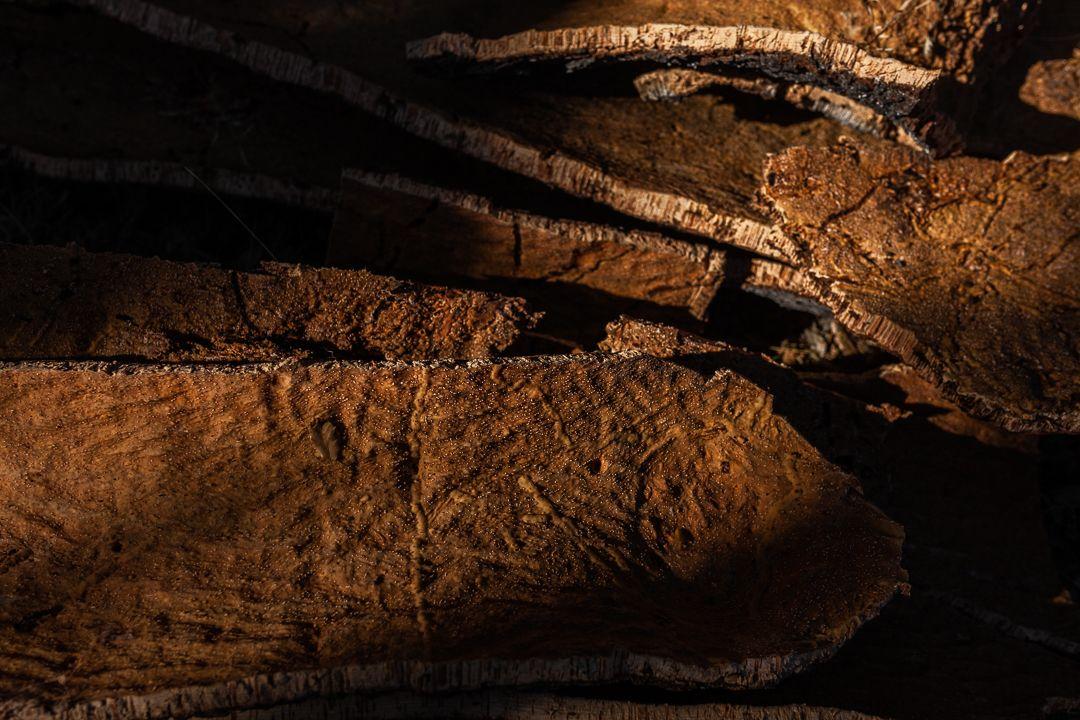 Obtención de corcho en los alcornoques de Fornillos de Fermoselle.