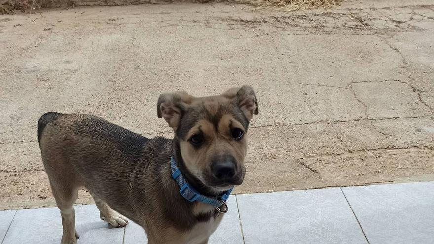 """Denuncian a un policía de Castelló por atropellar """"intencionadamente"""" a un perro"""