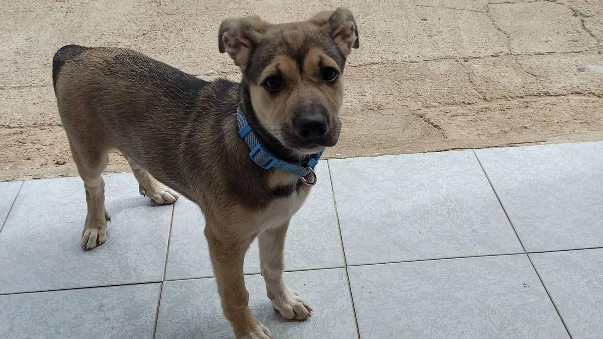 Imagen de Mika, cachorro fallecido el pasado 4 de junio tras ser atropellado por un coche de la Policía Local de Castelló.