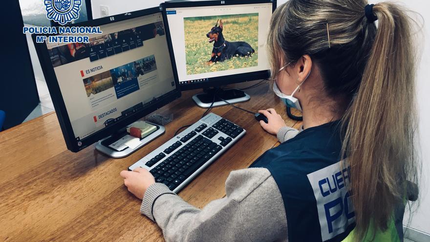 Detenen dues dones a Girona per estafar amb la venda de gossos de raça a Internet