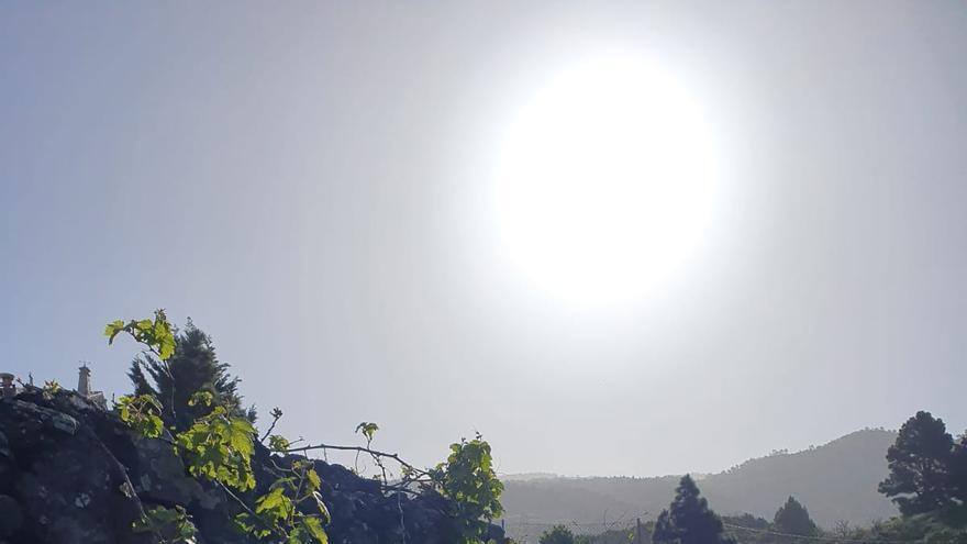 La Palma, entre los 8 paisajes de viñedos más espectaculares del mundo