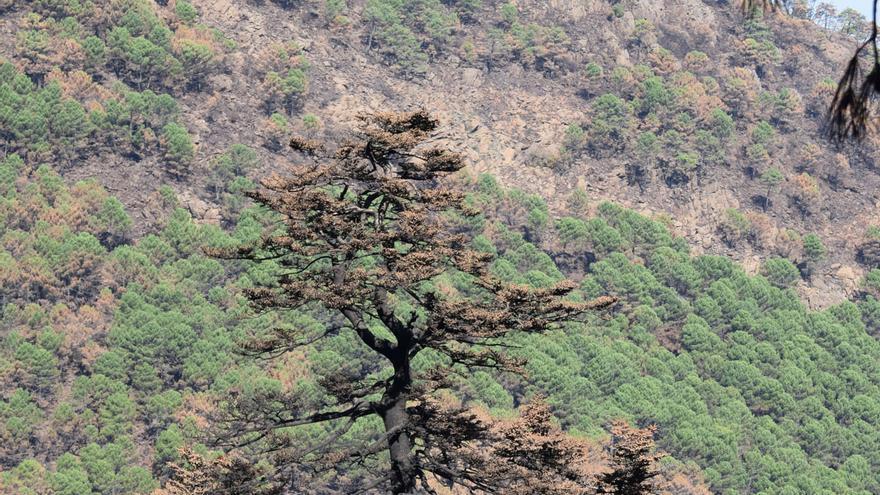 Sierra Bermeja espera autoregenerarse tras el fuego antes de poder reforestar