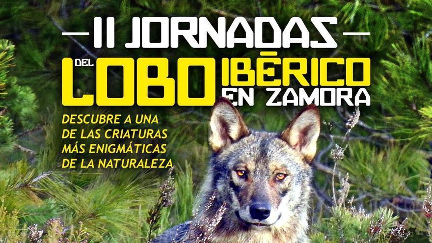 Ecología del lobo ibérico. La verdad de su presencia - Pepe España