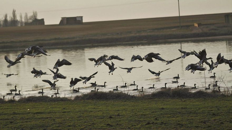 Zamora se suma al Día Mundial de las Aves Migratorias de la mano de las Lagunas de Villafáfila