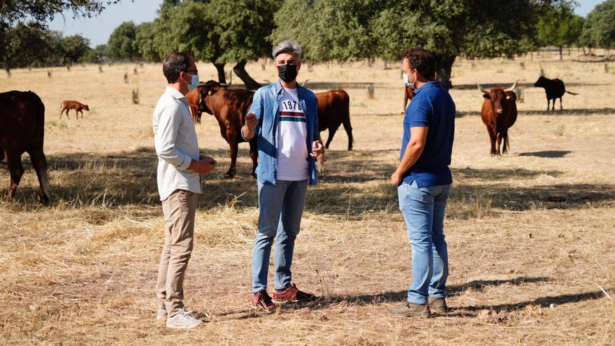 El PP de Pozoblanco defiende el consumo de carne de Los Pedroches