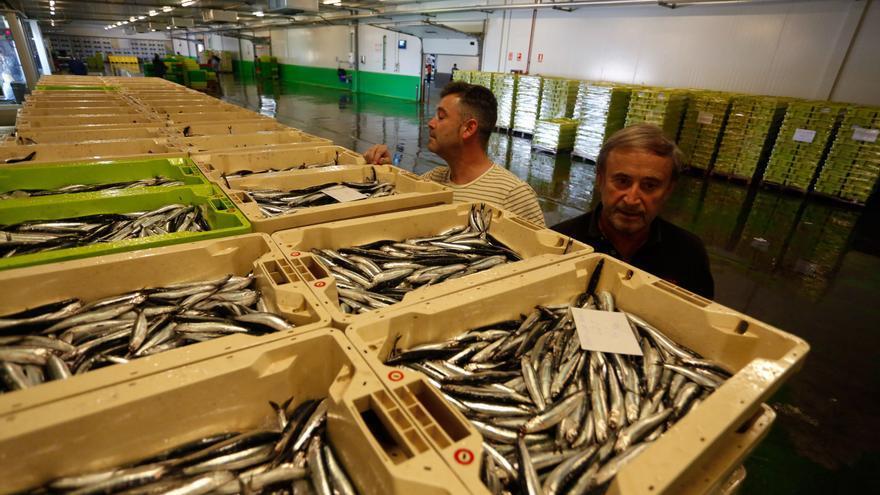 Las dos grandes lonjas pesqueras asturianas, ante el reto de mejorar su competitividad