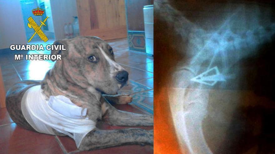 Detenido por disparar a un perro con un arco de caza