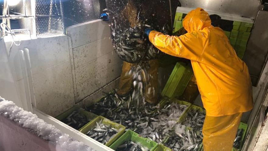 España y Portugal abren la puerta a asignar más sardina para la flota
