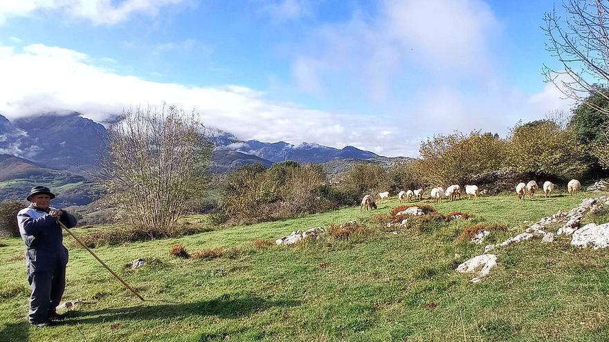 Pepe Mier, el último pastor de los montes de Asiegu, abandona el puerto