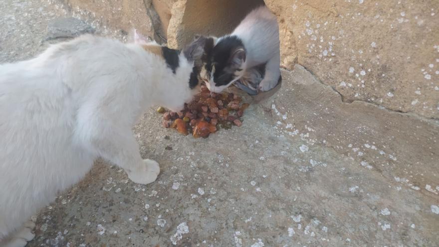 Defensa Animal Zamora denuncia envenenamientos a gatos y perros en plaza Argentina