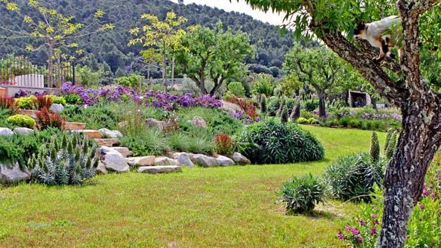 Artenvielfalt beim Mandelfeld auf Mallorca