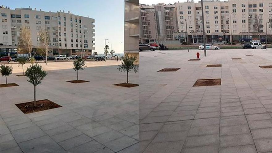 Desaparecen los nueve olivos plantados entre el hotel y el Palacio de Congresos