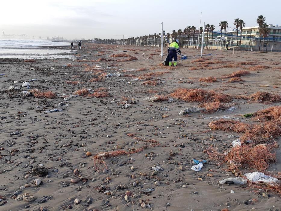 Limpieza de la playa de la Patacona tras el paso de la borrasca Gloria.