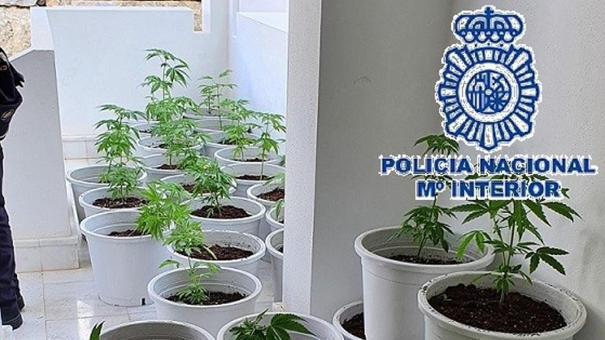 Desmantelan una plantación de marihuana en dos casas de Marbella