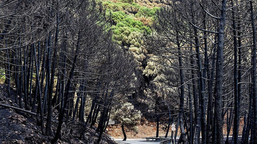 Sierra Bermeja ya sufrió dos incendios relacionados con cultivos de marihuana