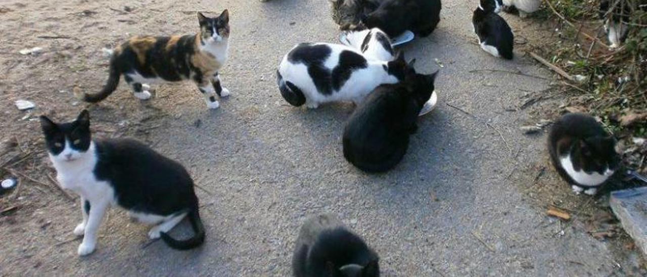 Una colonia de gatos callejeros de Ontinyent, en una imagen de archivo.  | LEVANTE-EMV