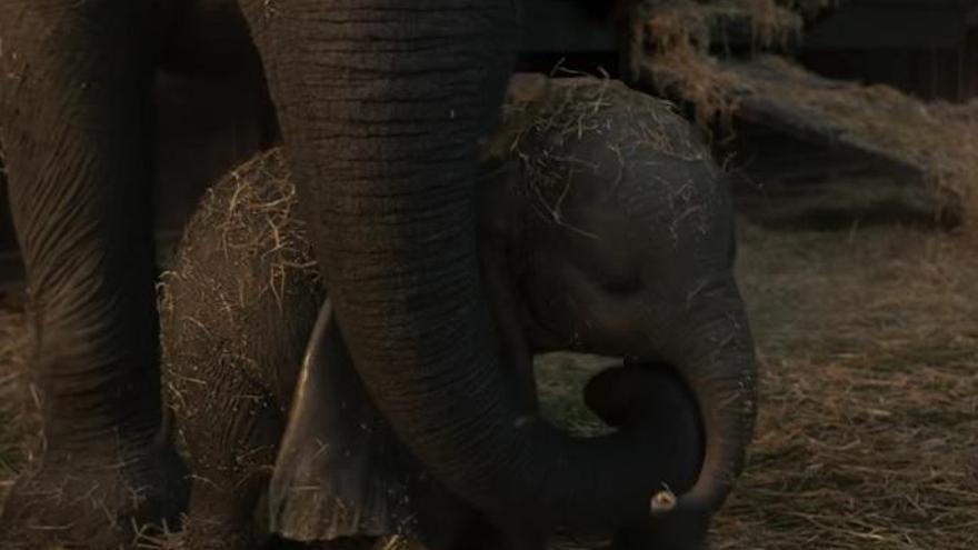 'Dumbo' vuelve a emocionar con su nuevo tráiler