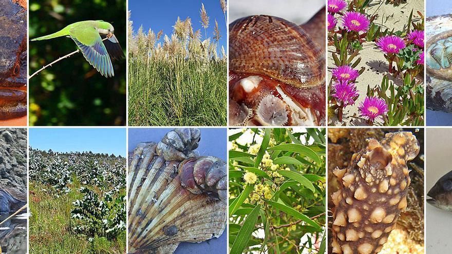 Las especies que amenazan la biodiversidad olívica