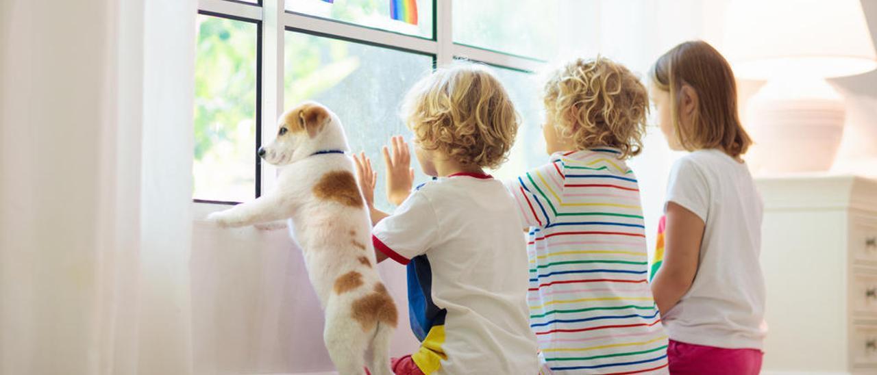 Las mascotas ayudaron a reducir el estrés en el confinamiento