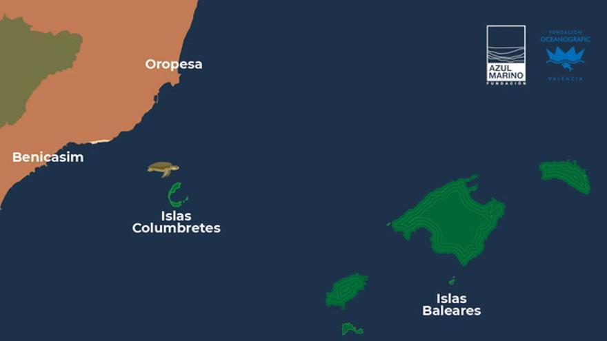 Colomera, la tortuga más 'castellonera', ya está cerca de Mallorca