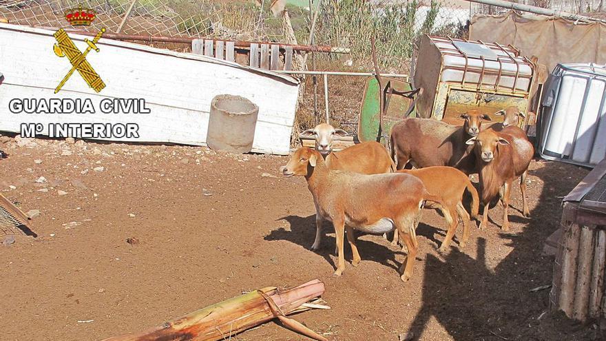 Un vecino de Gáldar condenado por matar a su perro recupera los animales