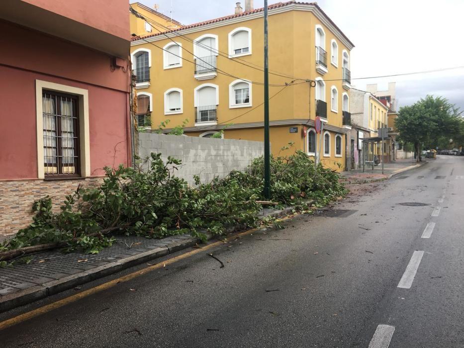 Árbol caído en calle San Juan Bosco, en Segalerva.