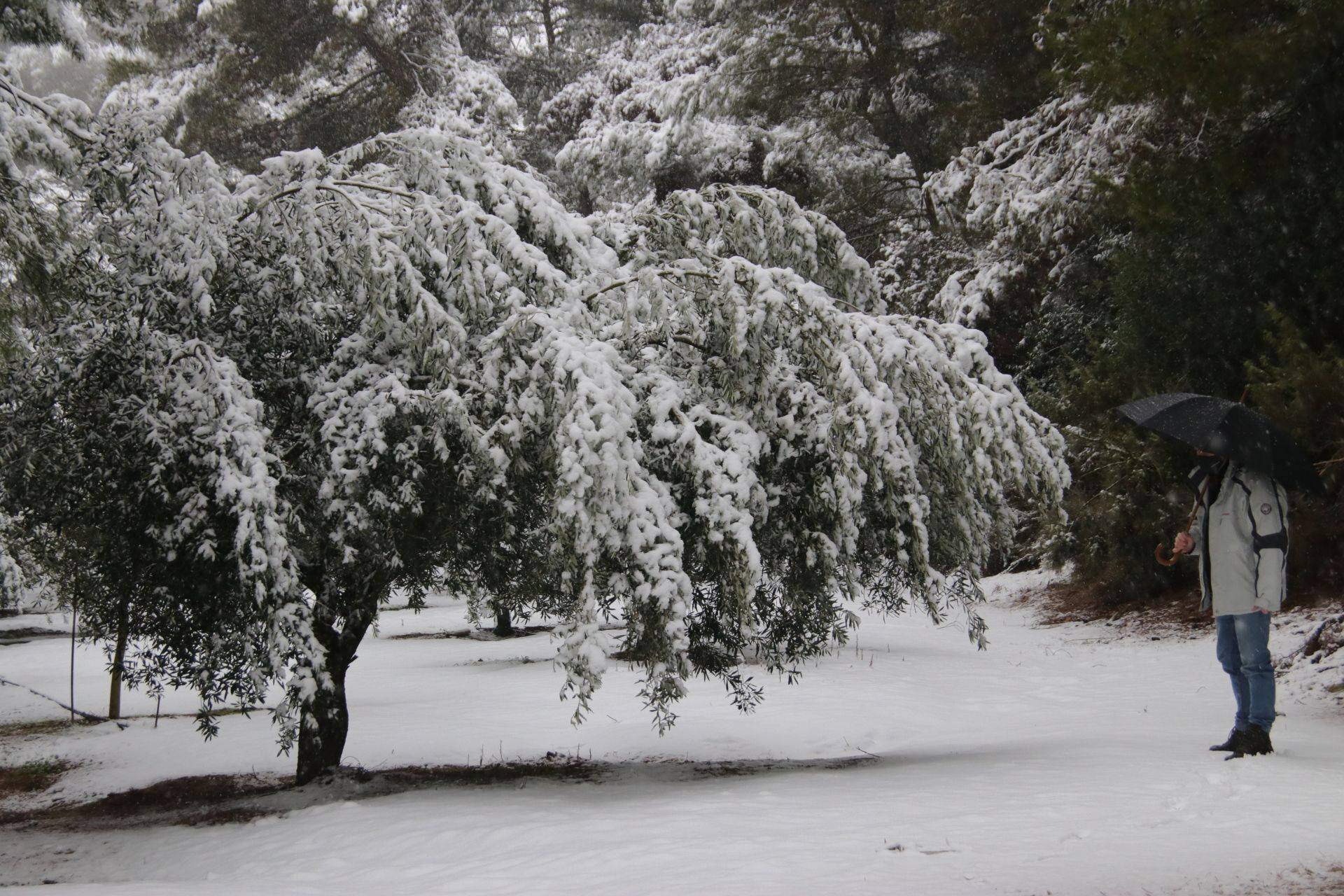 El temporal de nieve en la carretera que va desde Banyeres al Preventorio de Alcoy.