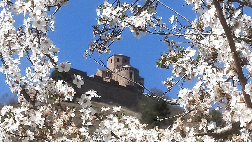 Cardona. La floració és la gran protagonista d'aquesta primavera avançada, que ofereix captures precioses i, sobretot, molta feina i activitat als insectes, que fan la pol·linització.