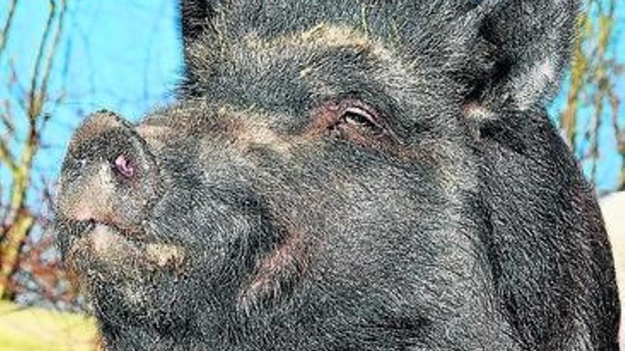 Los animalistas declaran la guerra a los ecologistas