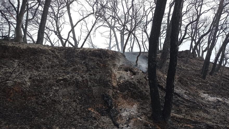 Els experts reclamen una gestió rendible del bosc per evitar els grans incendis