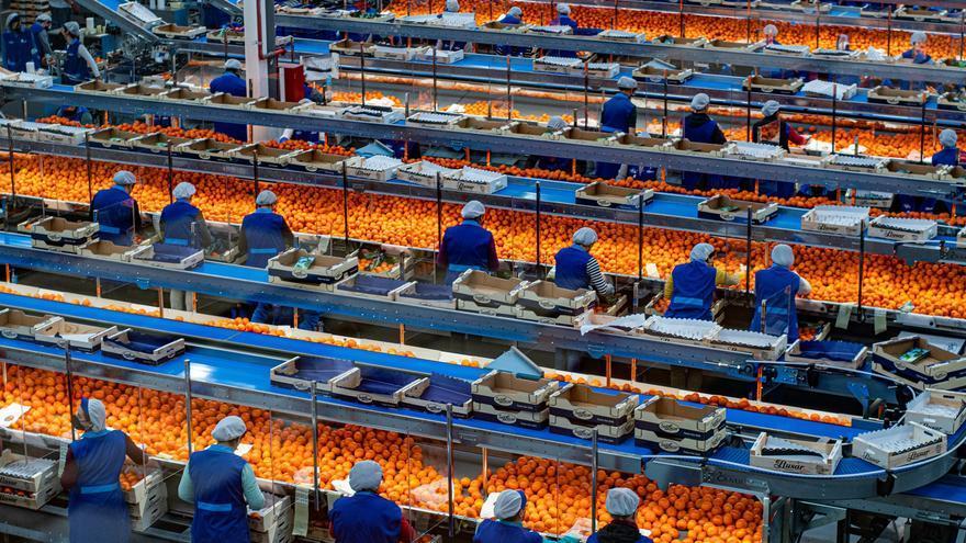Los fondos de inversión se interesan por el sector citrícola de Castellón