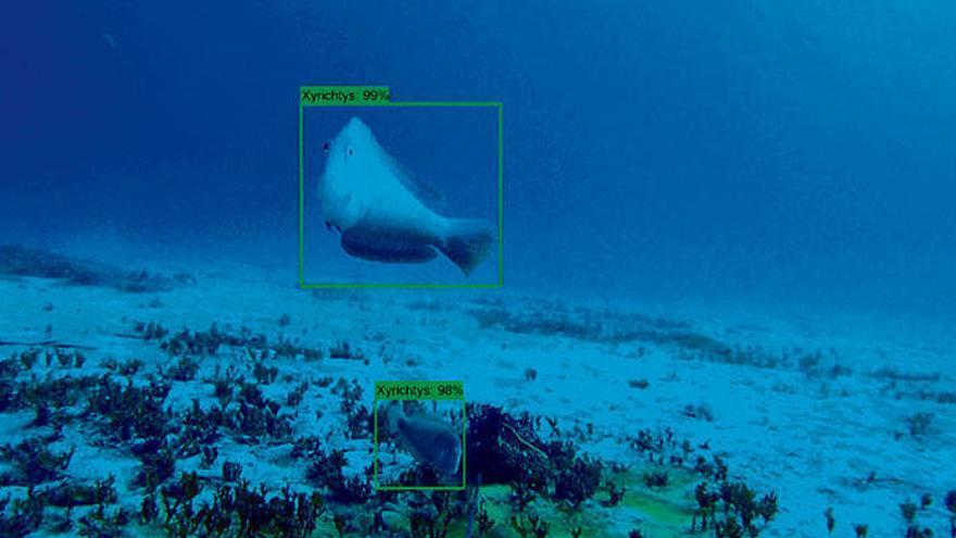 So checken die Meeresforscher von Mallorca den Fischbestand
