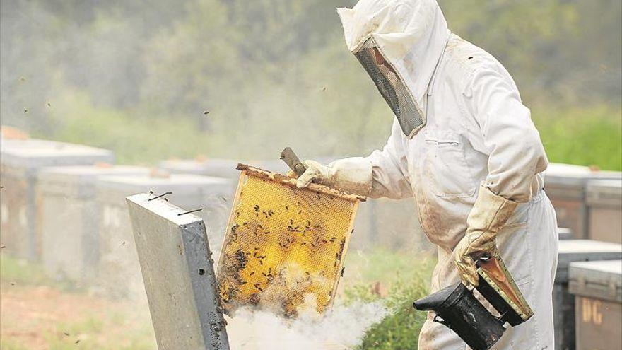 Las ayudas a la apicultura se pueden pedir hasta el 8 de julio