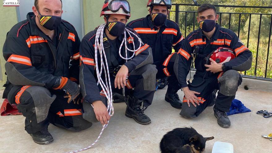 Los Bomberos de Castellón rescatan a un perro del barranco de Onda