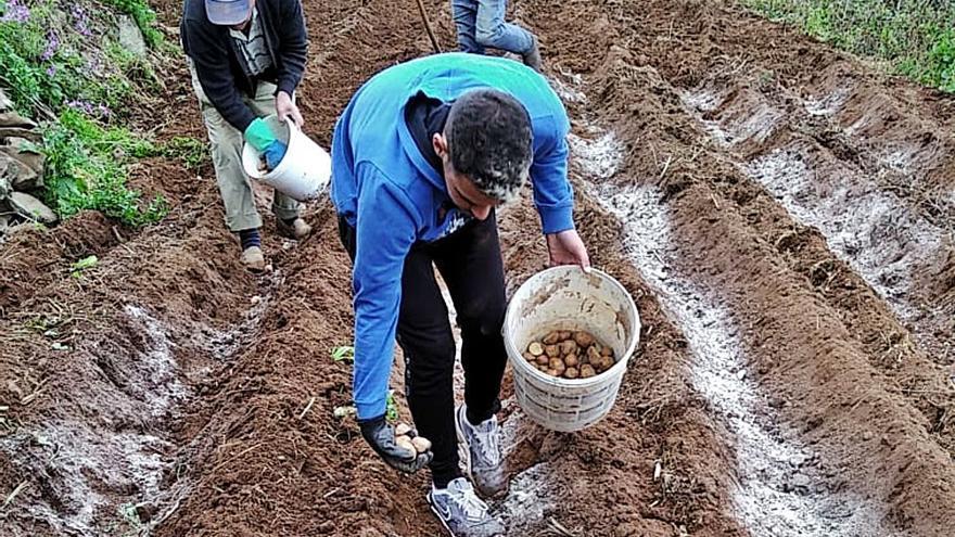 En Canarias hay cinco millones de kilos de papas sin vender