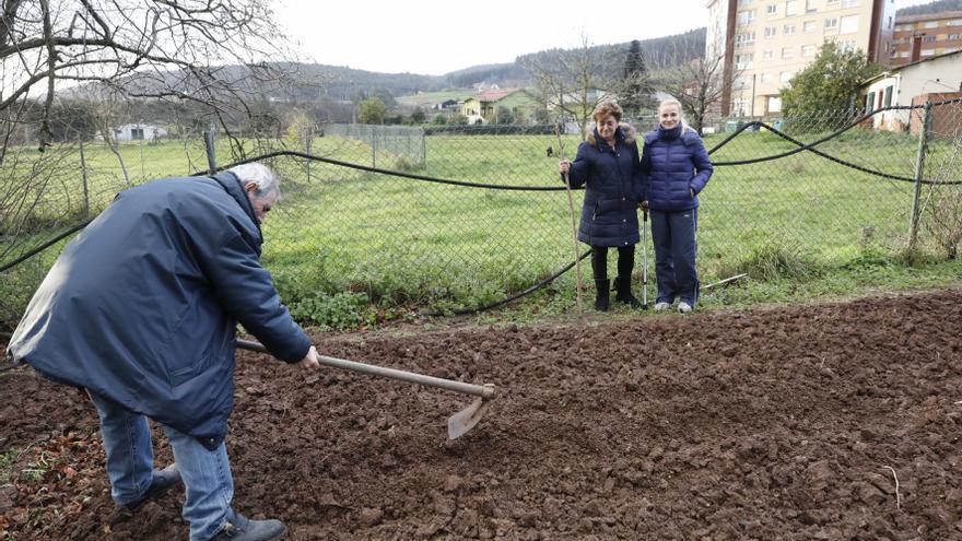 Superada la crisis de la polilla: todos los concejos de Asturias tienen el visto bueno para volver a plantar patata