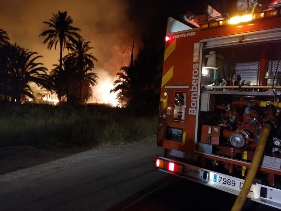 Más de 7.000 palmeras quemadas en varios incendios casi simultáneos en el Camp d''Elx
