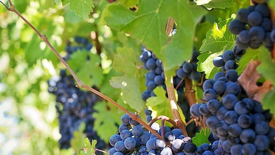 Vinos y conservas consolidan su recuperación al inicio de 2021