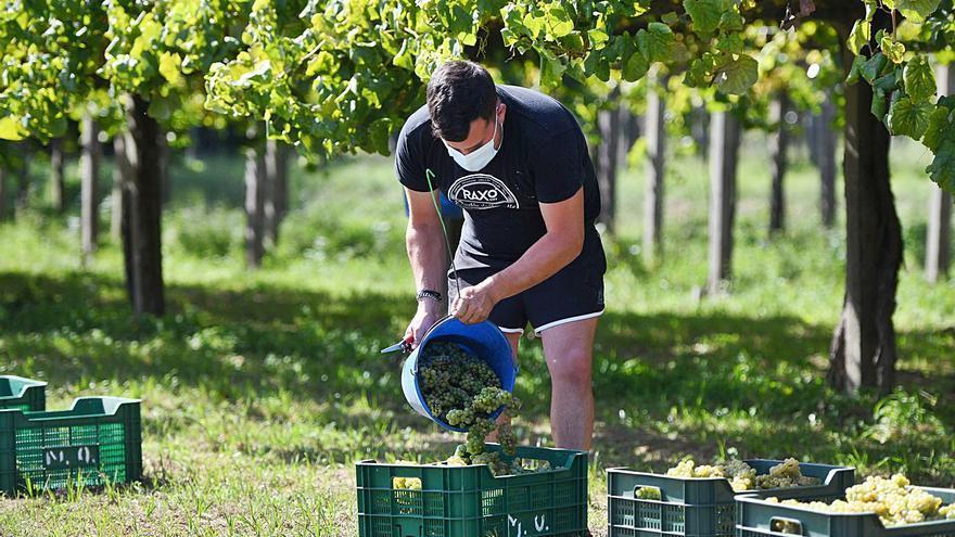 Los vinos Rías Baixas se refugian en las exportaciones para crecer frente al virus