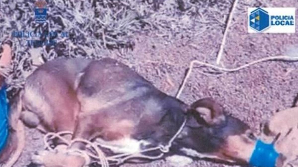Imagen en la que se muestra el estado en la que se encontró al can.