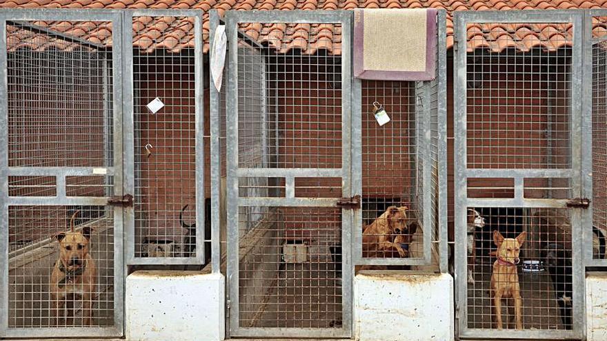 Chiva rompe con el servicio de recogida de animales tras la muerte de una perra