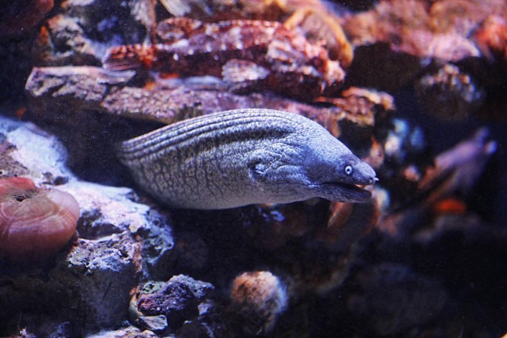 Die Fundación Palma Aquarium rettet in Not geratene Tiere. Doch wegen der Pandemie fehlen Gelder