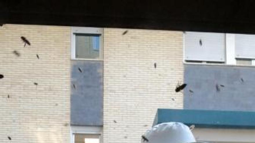 Retiran dos enjambres en el hospital y una calle de Alcoy